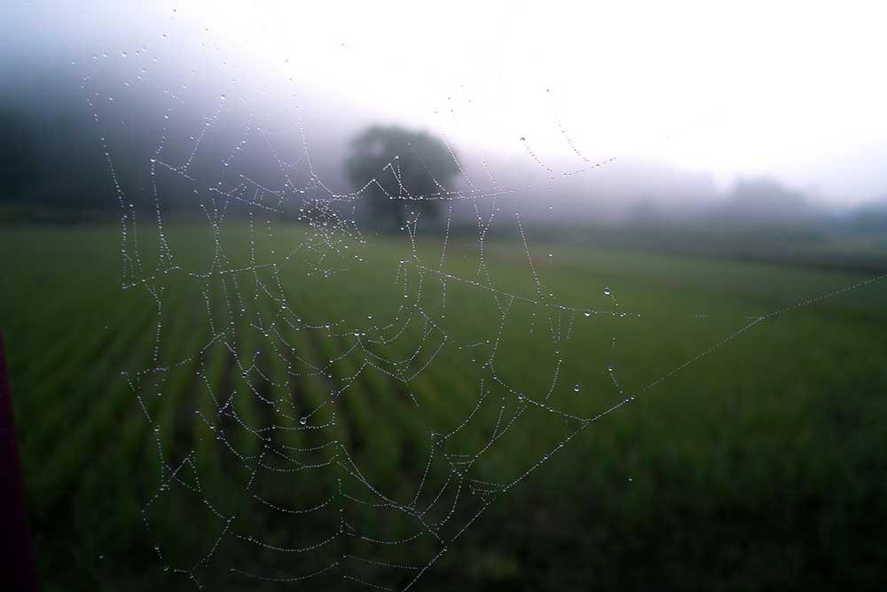 spyder-web