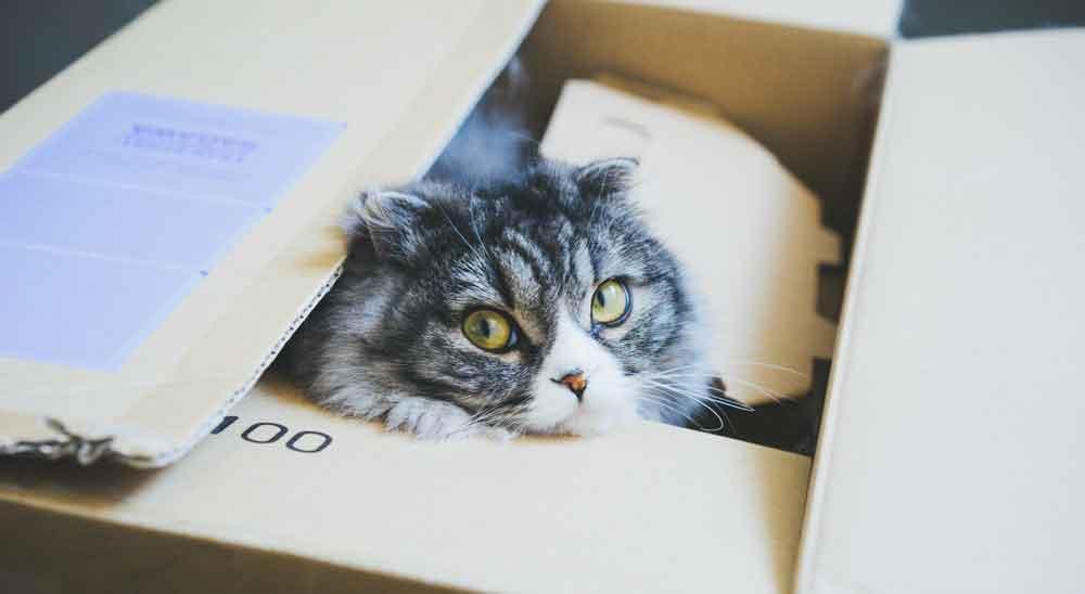 ダンボール猫