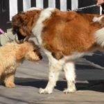 犬の逃亡防止と犬具の強度